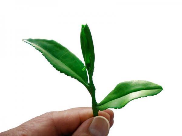 modellbau-naturgetreu-pflanzen